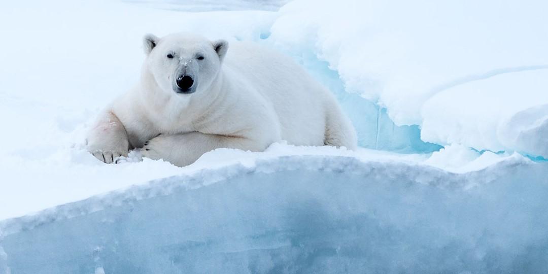 Preocupante: Por primera vez cae lluvia y no nieve en cumbre de Groenlandia